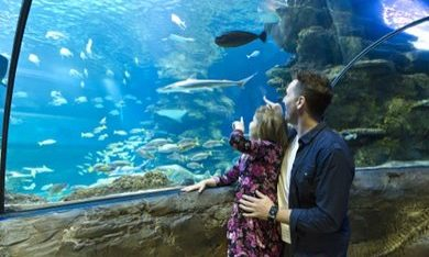 Sea Life londen tickets